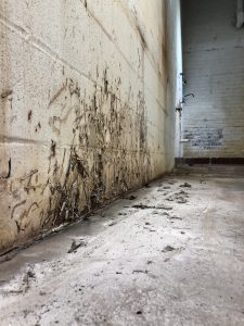 mold removal/remediation Duluth, Minnesota. Mold growth on walls in downtown Duluth.